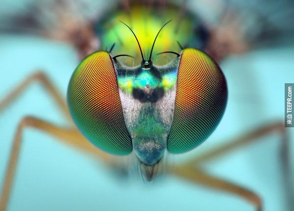bug close ups25