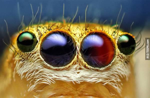 bug close ups27