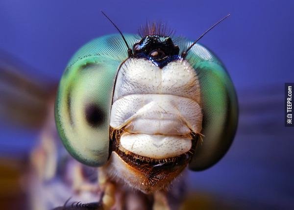 bug close ups28