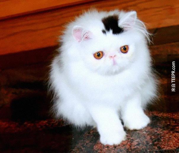 網路上爆紅!你一定要看看這10隻貓咪身上的奇特花紋!