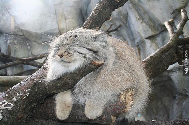 16隻最容易讓人有抱抱衝動的可愛小動物。天氣冷的時候就是要這樣才溫暖!