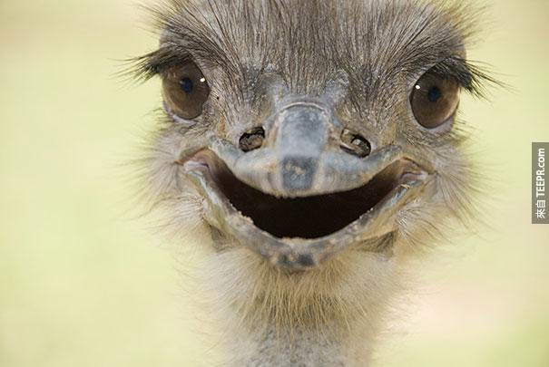 全世界30隻最開心的動物。看完後不開心都很難!
