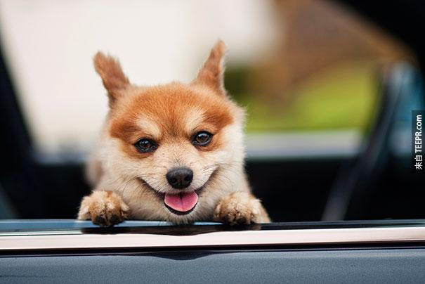 cute-smiling-animals-21