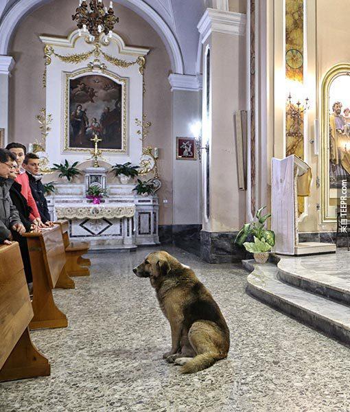這隻狗每天去教堂的原因讓我忍不住眼眶泛淚。他的原因令我不敢相信。
