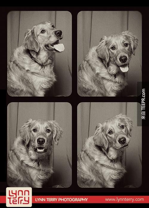 10個原因為什麼狗狗拍照亭是一個很好的點子。超可愛的!