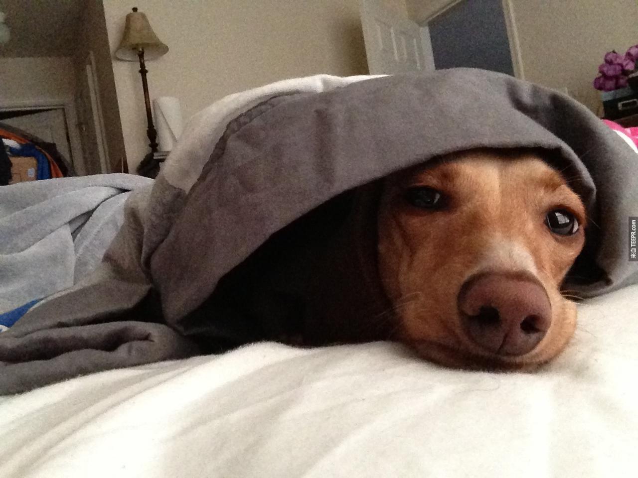 """17. """"哦,你說你需要用這張床睡覺嗎?那真的是太不好意思了。"""""""