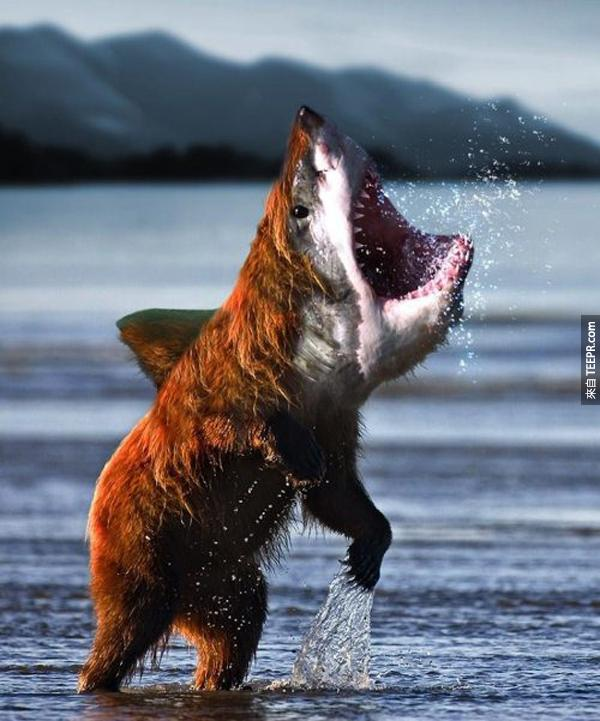23.) 大白鯊熊 (大白鯊 +  熊 = 全世界最強生物)