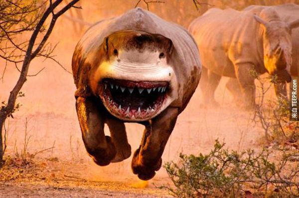 29.) 犀牛鯨 (犀牛 + 大白鯊 = 全世界第二強的生物)