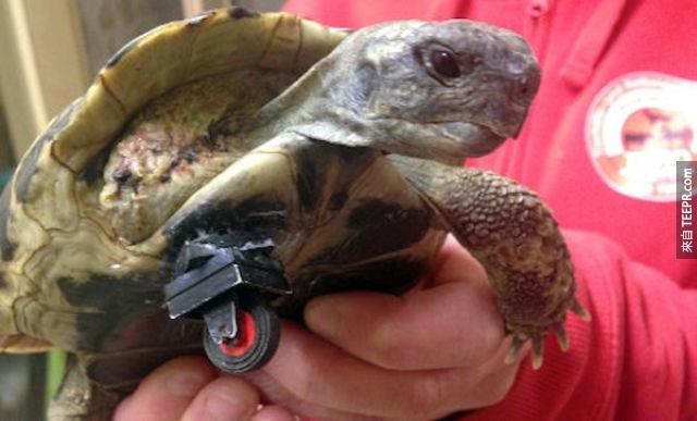 小烏龜的義肢。