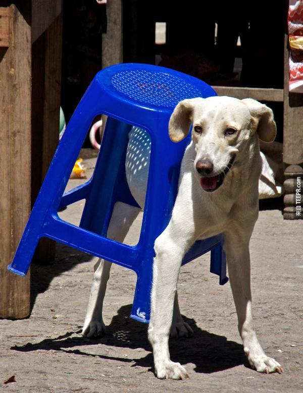 凳子不是這樣用的...它不是一件服飾...