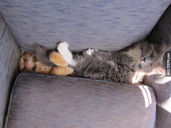又有兩隻貓咪成為沙發的受害者。