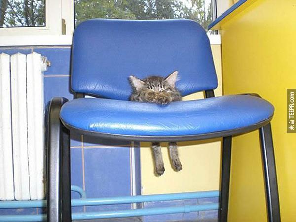 椅子心情不好的時候會綁架小貓咪。