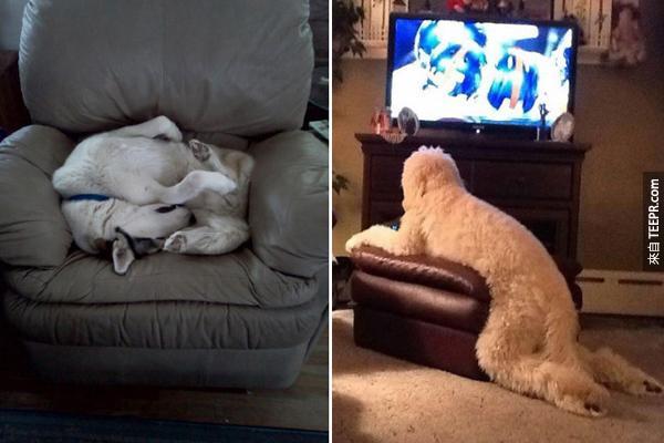 對狗狗來說,沙發真的是一個謎阿!