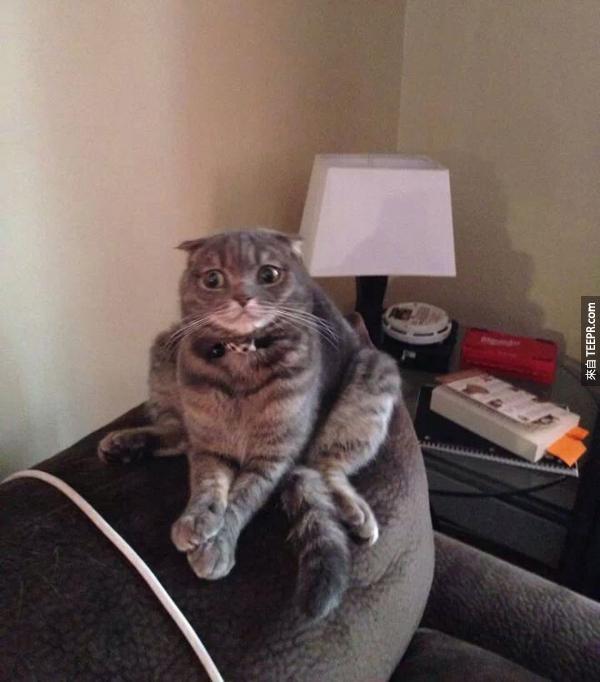 """這隻貓咪看起來受過家具的""""家""""暴..."""