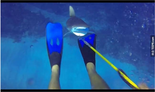 這名男子拍下他被鯊魚攻擊的全程影片。這段影片就是我最大的惡夢...