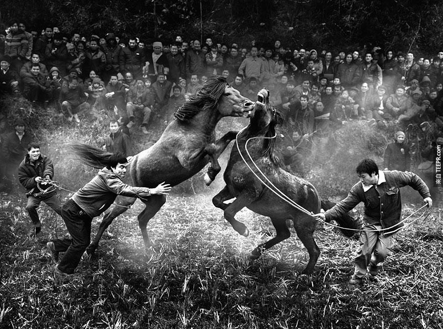 "中國國際獎:  ""廣西融水縣的馬戰"" (Horse fighting in Rongshui, Guangxi) by Ngai-bun Wong, China, 2nd Place, 2014 Sony World Photography Awards"