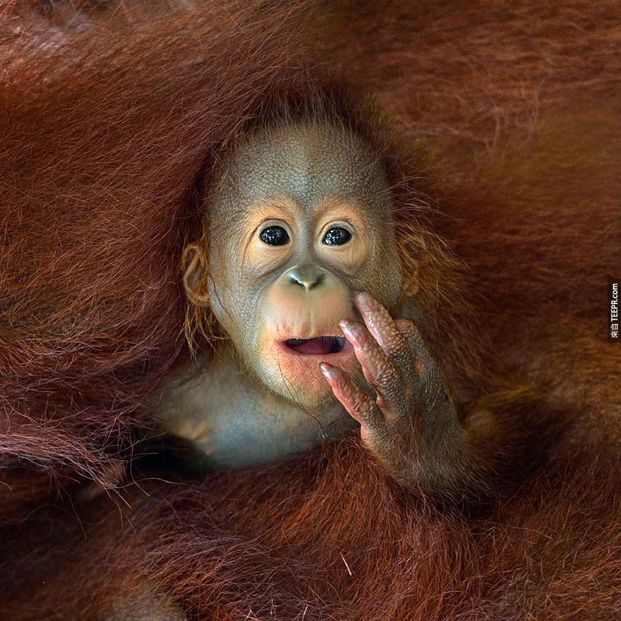 2014年索尼世界攝影大獎得獎作品出爐了。真的是太經典了!