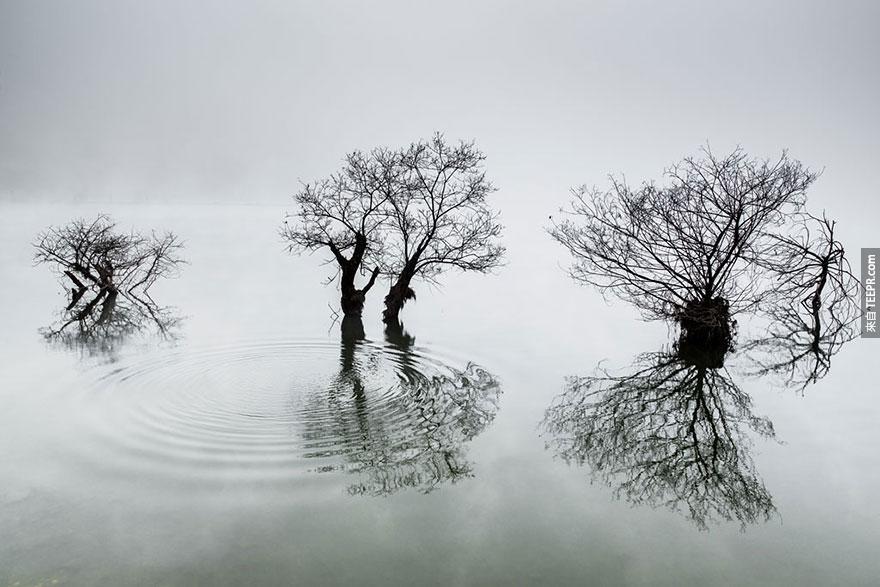 """南韓國際獎: """"湖裡的漣漪"""" Dowon Choi, Korea, 1st place, 2014 Sony World Photography Awards"""
