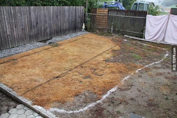 2011年的時候他們的院子長得像這樣。