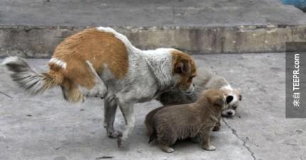 這隻流浪狗遭受到最殘酷的命運,但是後來卻得到了最好的禮物。