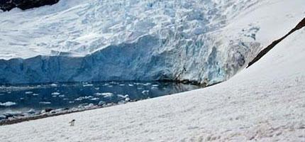 當這名攝影師在南極洲正要拍下壯麗的冰河時,突然從旁邊蹦出了這個東西...WOW!