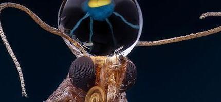 誰說地球上沒有外星生物?看完這些昆蟲的放大照後你還會那樣想嗎?