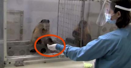 他們讓兩隻猴子做同樣的工作,但給其中一隻的酬勞比較好。接下來待遇較差的猴子的反應太驚人了!