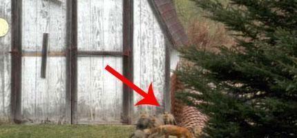 你一定要看看這名男子在他的小木屋裡面找到了什麼。(提示:不是怪物)
