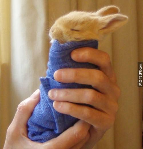 30隻超可愛的小動物被包成捲餅。這太犯規了!