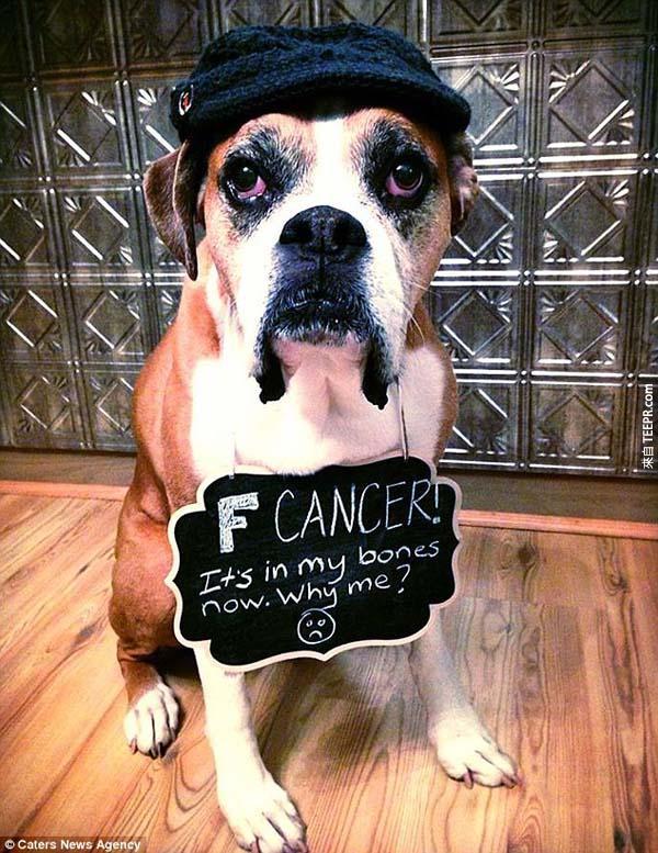 當她發現她的狗快要死的時候,她悲痛欲絕。所以她接下來做了這些事情...請準備衛生紙!