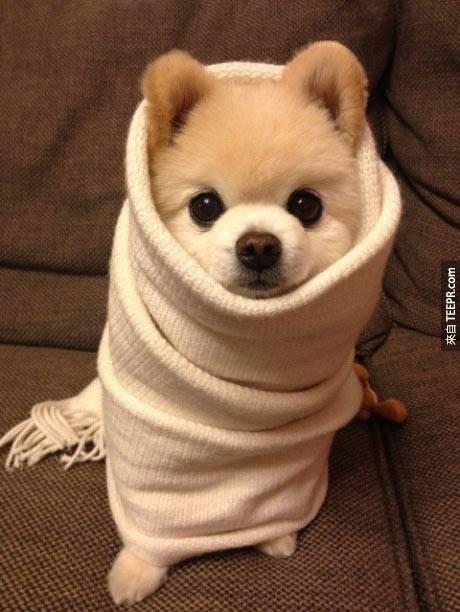 22. 這個...根本是狗狗界裡面的芭比娃娃啦~