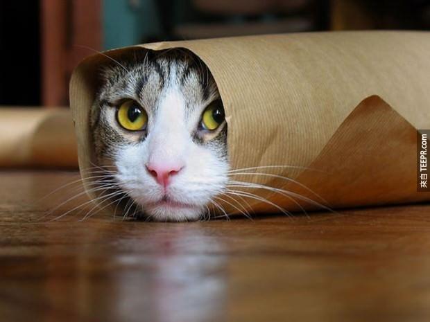 Kitty burrito in a to-go wrapper.