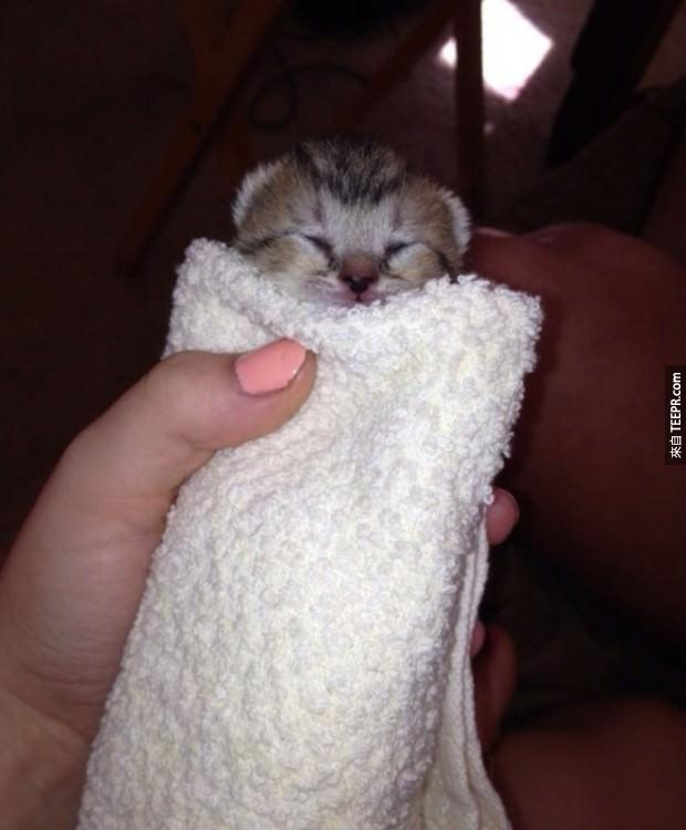 The most teenie weenie itsy bitsy kitten burrito ever!