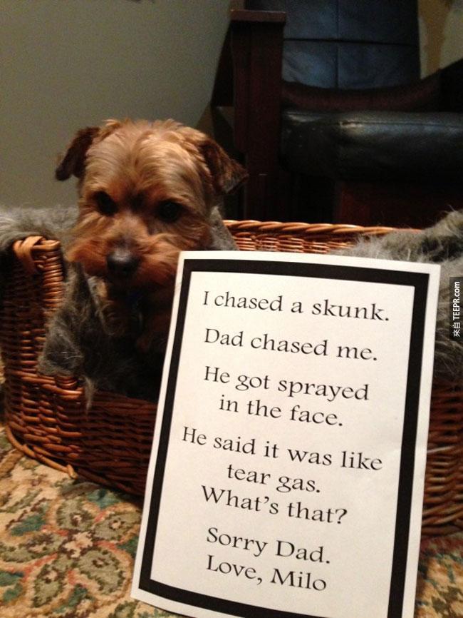 這33隻狗做了一些非常調皮的事情。這麼說吧...他們後來受到了應有的處罰。(我笑到水都打翻了...)