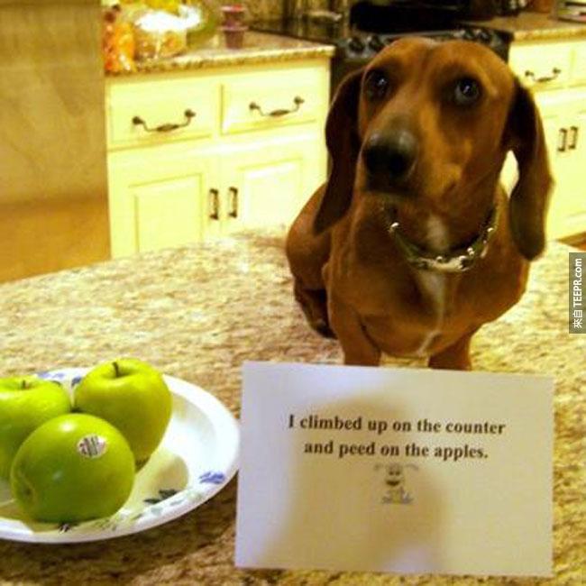 29. 我爬上了廚房台然後噓噓在蘋果上。