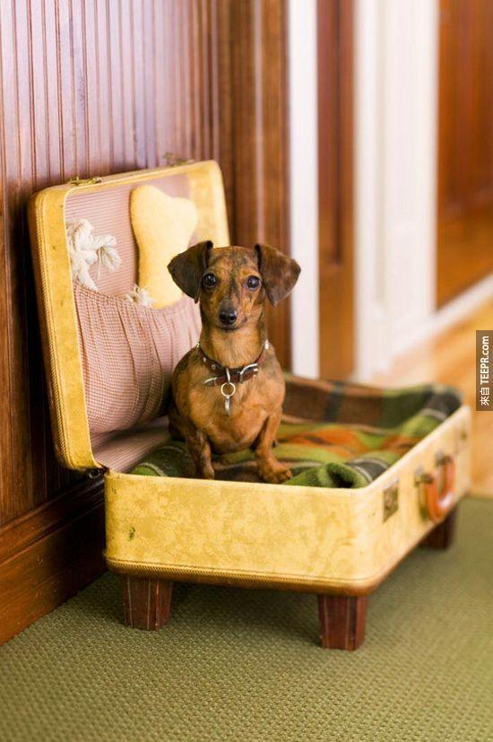 20. 把旧的行李箱变成毛宝贝的床。