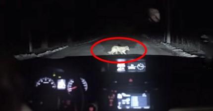 有一隻狗忽然跳到了這台車子前面。接下來發生史上最扯的詐騙案。
