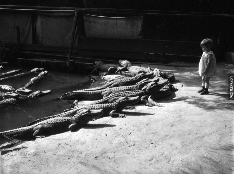 這些鱷魚做的事情真的會讓你大吃一驚!但是絕對不是你想的那樣。超古怪的!
