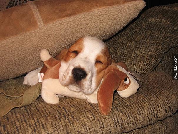 cute-animals-sleeping-stuffed-toys-12