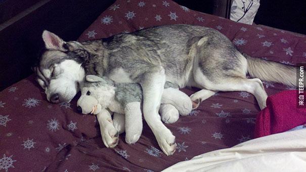 cute-animals-sleeping-stuffed-toys-2