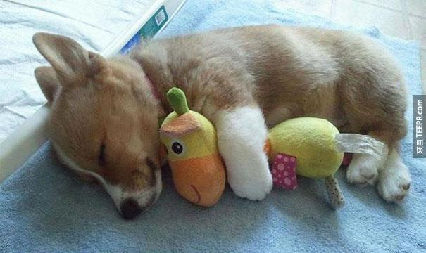 cute-animals-sleeping-stuffed-toys-41