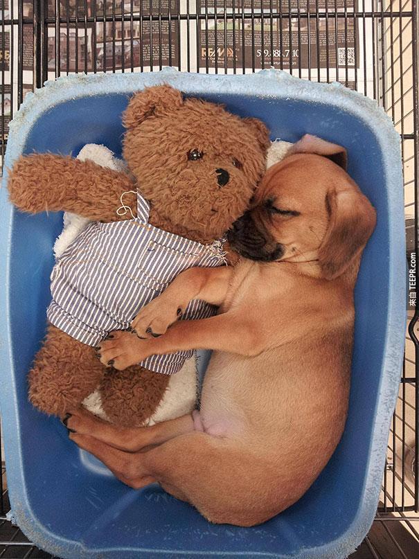 cute-animals-sleeping-stuffed-toys-9