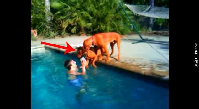 當他的主人潛到水裡面,他的反應讓我看到狗狗真的太愛人類了。
