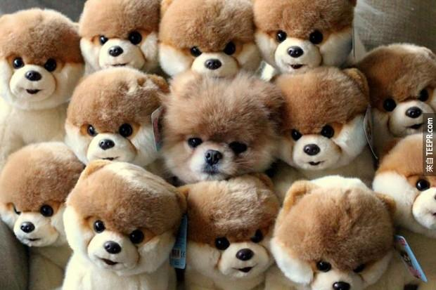 NOPE! I SEE NOTHING BUT STUFFED ANIMALS.