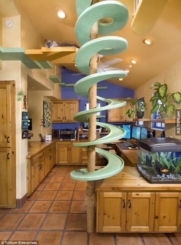 你可能會覺得跟18隻貓住在一起是件很瘋狂的事情,但是當你走進這間屋子的時候就會發現太棒了!