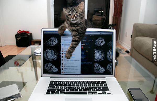 推特 (Twitter) 的用戶每分鐘PO (Tweet) 277,000個訊息。