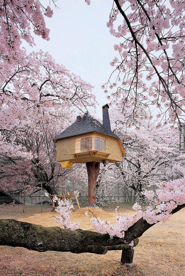 這棟樹屋看起來根本就像是從童話故事裡的一樣。如果要我一輩子住在裡面也願意!