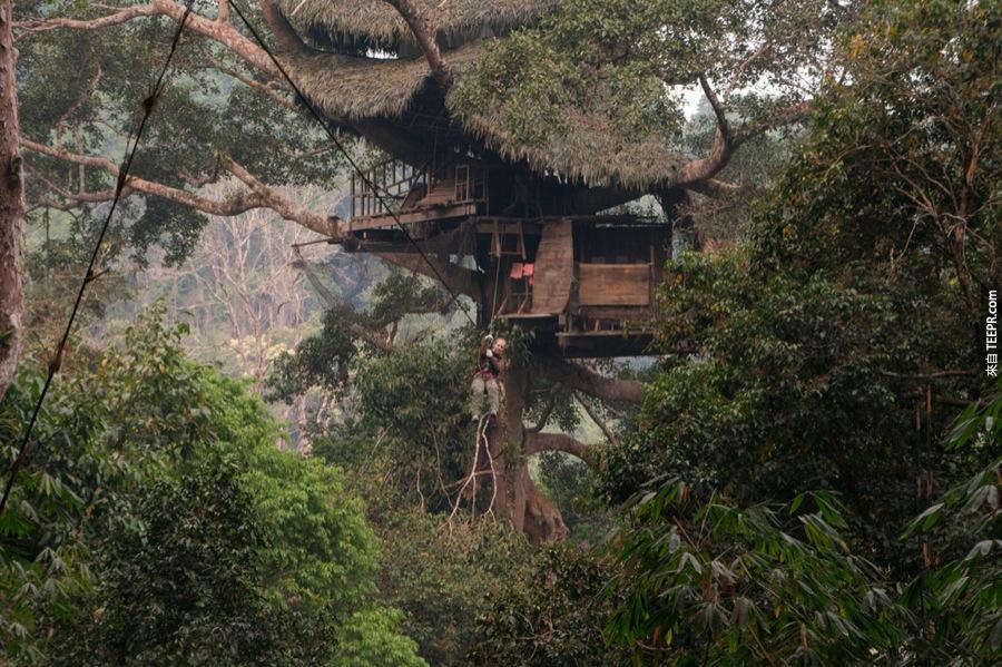 12)長臂猿樹 - 老撾
