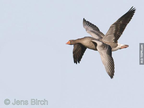 12.) 這...這是什麼鳥?