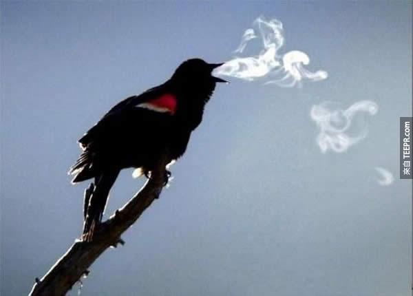 5.) 自以為可以吐煙圈就很酷...